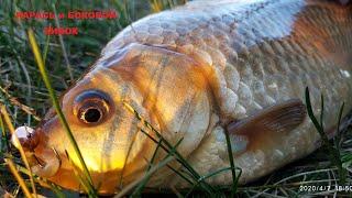 КАРАСЬ и БОКОВОЙ КИВОК рыбалка на карася весной