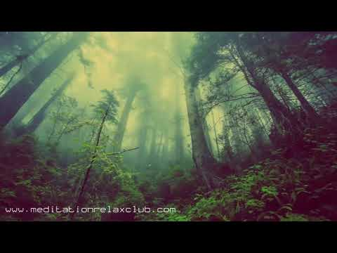 Natural Cure Music: Calm Relaxing Songs for Stress Relief, Forest & Ocean Sounds