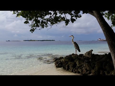 Maldives 2014 - Vilamendhoo Island - Snorkeling