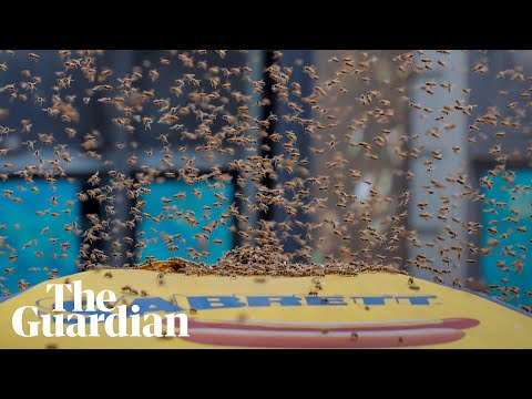 20,000 bees swarm a New York City hotdog stand