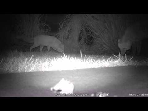VicTsing® Wildlife Camera 12MP 1080P HD Game Camera