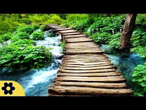Zen Meditation Music, Soothing Music, Relaxing Music Meditation, Zen, Binaural Beats, ✿2587C