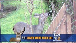 Garden Guru Offers Advice To Deer-Proof Your Yard