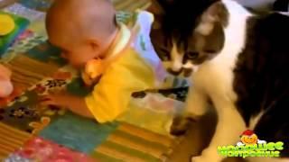Лучшая подборка Кошки и Дети!  Funny Videos Cats and Kids! [Канал хорошего настроения]