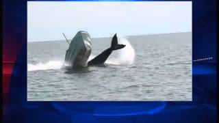 Funny Things   Funny Videos   Whale Collides With Fishing Boat 2013 HQ