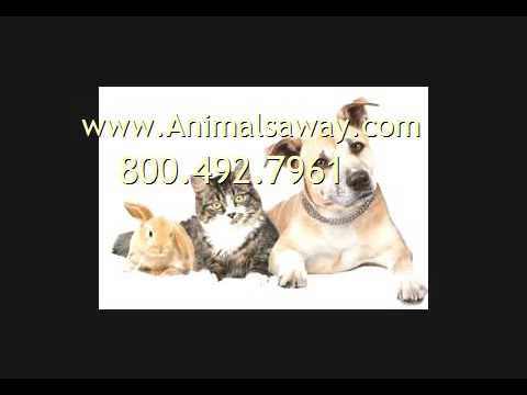 Need Pet Transport To Angola Call Animals Away