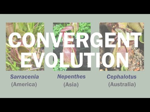 Intro to the Wonders of Convergent Evolution