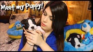 Meet My Puppy   Puppy Haul.