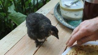 Pallet Wood Trellis Arbour For Peaceful Dining. Manger En Paix Au Jardin. Comer En Paz Al Aire Libre