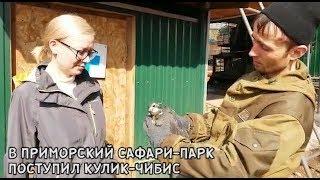 В ПРИМОРСКИЙ САФАРИ-ПАРК ПОСТУПИЛ КУЛИК ЧИБИС