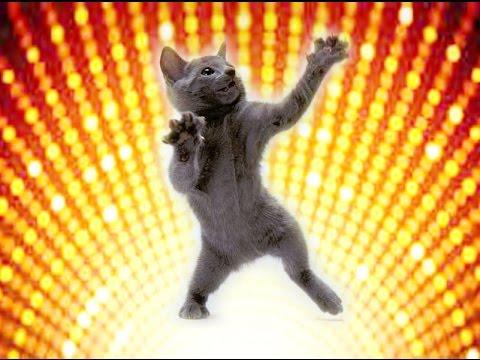 Смешные кошки 19 Приколы с животными осень 2015 - коты