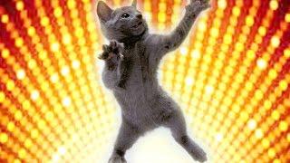 Смешные кошки 19 ● Приколы с животными осень 2015 - коты ● Funny cats vine compilation ● Part 19