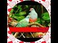 Telugu christian marriage songs (paramuna nirnayame) christian song JPJ