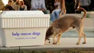 Bud Light Rescue Dog