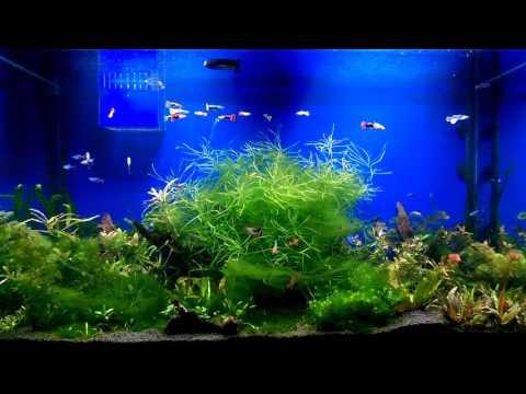 Aquarium Light Day Cycle By Arduino Nano Youtube