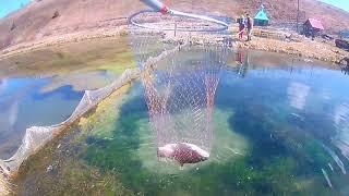 Платная рыбалка. Обзор платных прудов.