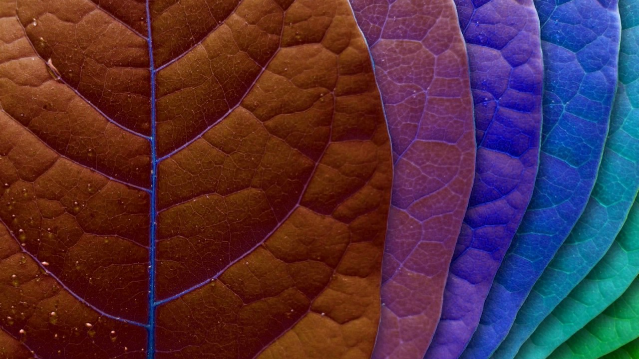 Color Changing Wallpaper Color Changing Leafs Wallpaper Engine Youtube
