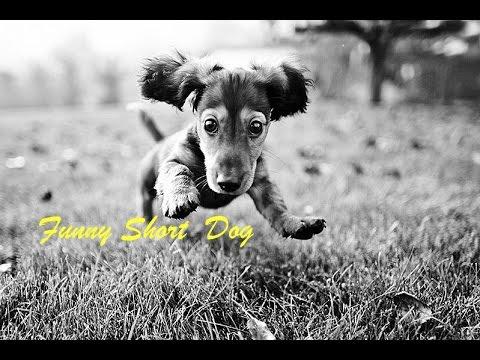Анимашки картинки собаки щенки смешные