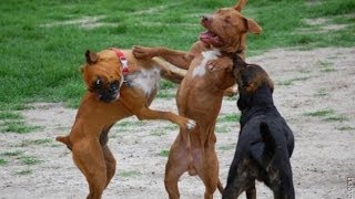 Нарезка смешного видео про животных