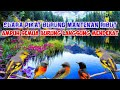 Suara Pikat Burung Mantenan Ribut  Mp3 - Mp4 Download