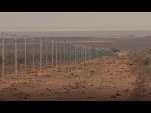 Australian Made Sheep Fencing Eyre Peninsula SA