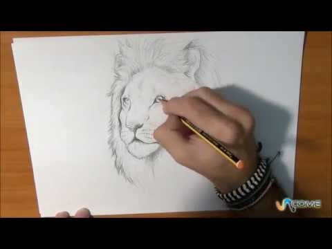 Come Disegnare Un Leone Vero Youtube