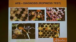 Honey Bee Diseases and Pests, Medhat Nasr PhD, NY Bee Wellness
