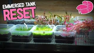 Emmersed Aquatic Plants  | Tank Re-Do | Daily Vlog Challenge #17