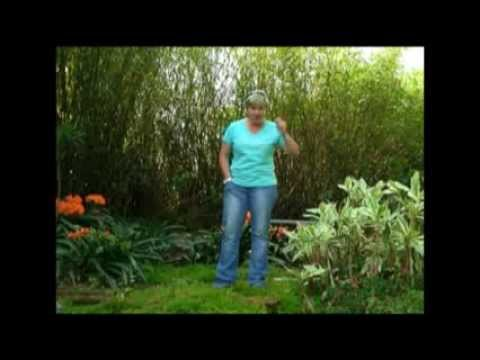 The Gardener Magazine: Planting For A Shady Garden