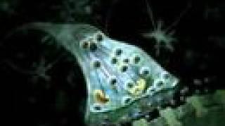 Neurotransmitter Synapse 3D Animation