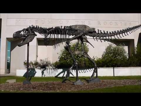 """Big Mike"" Bronze Cast, Tyrannosaurus rex, Museum of the Rockies, Bozeman, Montana"