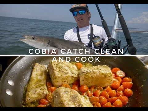 COBIA CATCH CLEAN And COOK!! Ft. How To Fillet Cobia