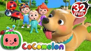 Download Where Has My Little Dog Gone? | +More Nursery Rhymes & Kids Songs - CoCoMelon Mp3 and Videos