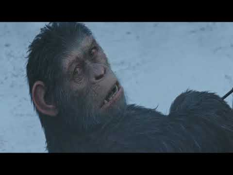 Red Donkey's Death Scene | War Of The Planet Of The Apes (2017)