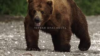 Трейлер «Медведи Камчатки. Начало жизни», 55 минут, Россия, 2018