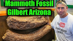 Discovery Park - Gilbert, Arizona - Mammoth Fossil