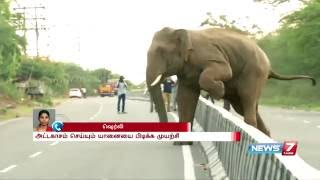 Wild elephant herd enters in to city near Coimbatore | News7 Tamil