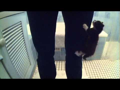 Cute kitten climbs owner and sits on her shoulder.