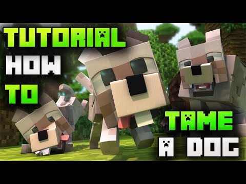 how-to-tame-a-wolf-in-minecraft-2020