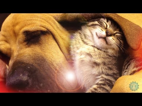 MUSIC FOR PETS - Relaxing Soothing Music for all types of Pets - Brainwave Entrainment