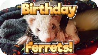 Happy 2nd Birthday! - Ferret Cam 14