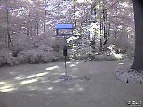 Feedercam Capture (2013-09-10)