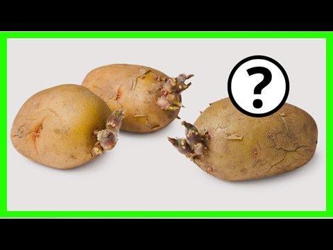 Wann Darf Man Kartoffeln Nicht Mehr Essen