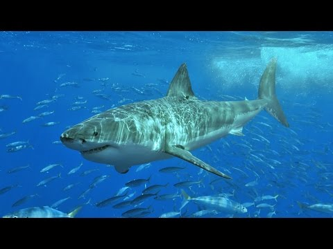 Thumbnail: A Navy SEAL explains what to do if you're attacked by a shark