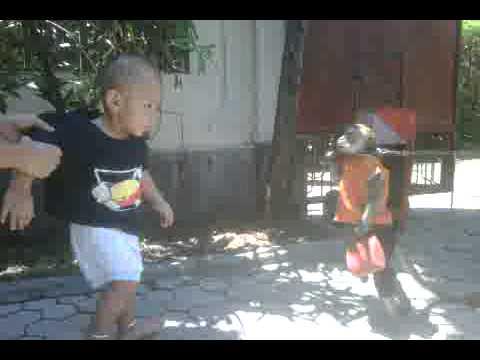 Full Download Monyet Moyet Makan Besi Monyet Mati Makan Cili