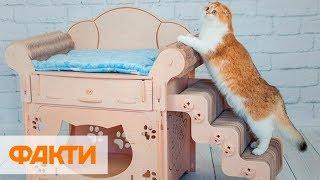 Мебель для животных и мягкие игрушки. Какой бизнес открыли победители конкурса Донецкий куркуль