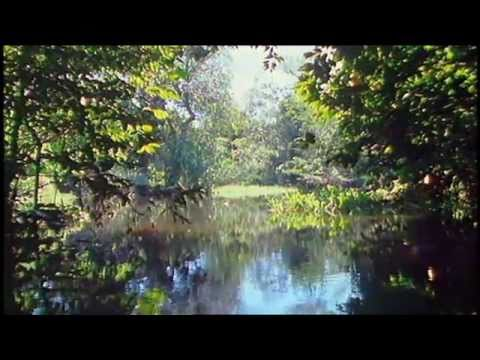 biodiversity rainforest - photo #35