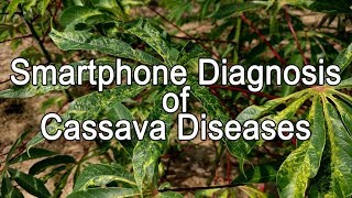 Phone App for Cassava Disease Diagnosis
