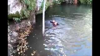Funny Dogs 2 Golden Retrievers Go Nowhere Fast Swimming in Circles Trying to bring Same Stick In
