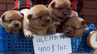 Москва птичий рынок